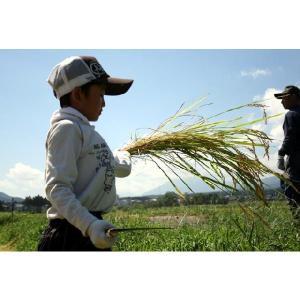 新潟産 米  5kg×1袋 お米 キヌヒカリ5kg 29年産 白米 分づき お米安い|kosihikari|05