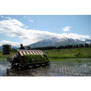 ミルキークイーン5kg(玄米)新潟県 妙高産 (29年産)|kosihikari|05