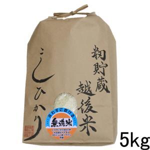 籾貯蔵・越後米コシヒカリ5kg(無洗米)新潟県産 令和元年|kosihikari