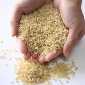 新米 玄米10kg 【5kg×2袋】 令和2年 新潟県産 つきあかり10kg(玄米)新米 10kg 2020 美味しいお米 10kg 10キロ 美味しい玄米|kosihikari|05