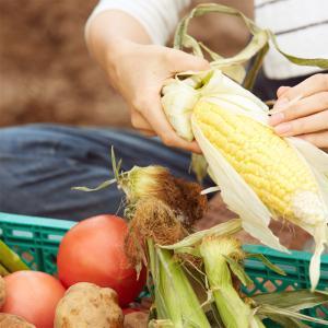 旬の野菜セット|kosihikari