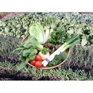 旬の野菜セット|kosihikari|03