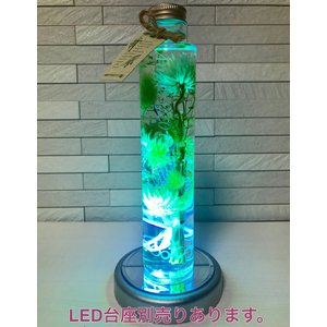 【名入れ】 ハーバリウム healing 5色から2本選べる ★デザインボトル★ 紫 赤 黄 青 緑 kotohana 10