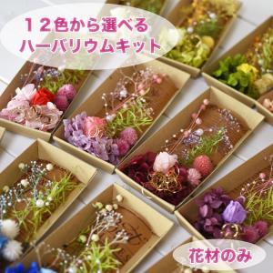 ハーバリウム 花材のみ バラ あじさい かすみ草 パール プリザーブドフラワー キット