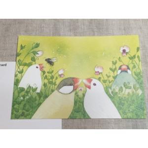 【文鳥院まめぞう】ポストカード『文鳥の世界』|kotoricafe