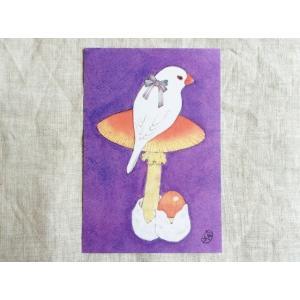 【文鳥院まめぞう】ポストカード『文鳥にリボン』|kotoricafe