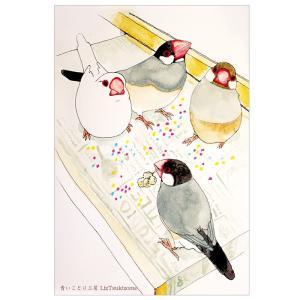 【ことりカフェ心斎橋×青いことり工房】オリジナルポストカード 文鳥|kotoricafe