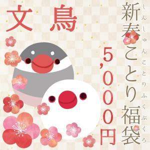 予約品 2019 新春ことり福袋 文鳥 5,000円 2019/1/10〜発送 数量限定|kotoricafe