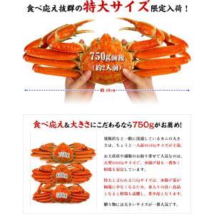 (かに カニ 蟹) ズワイガニ ボイルずわい蟹/姿(750g前後×4尾入り) |希少な特大サイズを厳選|かに|他の商品と同梱不可|kouragumi|02