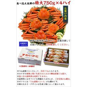 (かに カニ 蟹) ズワイガニ ボイルずわい蟹/姿(750g前後×4尾入り) |希少な特大サイズを厳選|かに|他の商品と同梱不可|kouragumi|04
