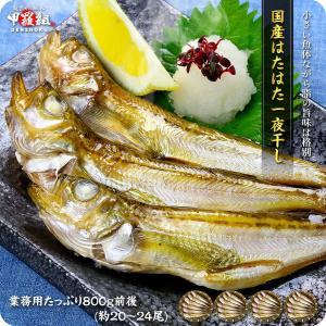 日本海のハタハタ一夜干し業務用たっぷり1kg(約20〜25尾前後)【はたはた】【ハタハタ】|kouragumi