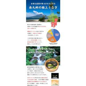 鹿児島県産 特大うなぎ蒲焼き 200g前後×1尾 (有頭/背開き真空包装)|kouragumi|04