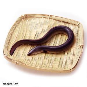 国産活鰻 自社養殖 4尾 総重量1kg 甲佐養鰻場|kousa-youmanzyou