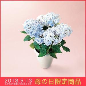母の日 ギフト アジサイ 鉢植え 万華鏡5号鉢 ブルー 青 花 プレゼント 2018|kss-s