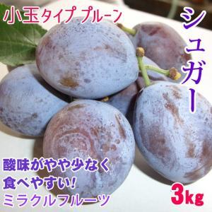 シュガー プルーン 3kg 小玉プルーン