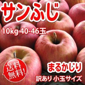 まるかじり-サンふじ 訳あり小玉 約10kg 36〜48玉【長野りんご】 送料無料 リンゴ