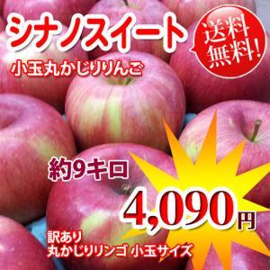 旬:10月下旬発送予定 シナノスイート約9キロ丸かじり 小玉りんご 訳あり りんごの酸味がにがてとい...