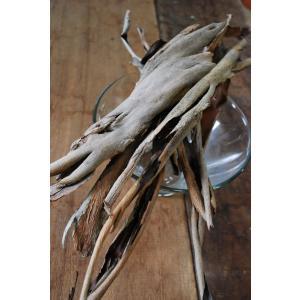 ユーカリ銀世界樹皮 | スワッグ・リース・ウォールデコ素材  手作りギフト素材 ナチュラル グリーン材料|kugelfg