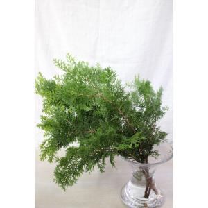 新鮮なヒバ系コニファーの葉枝(生花)です。 濃い緑色の葉をもち、先葉は明るい緑色の葉になります。 針...