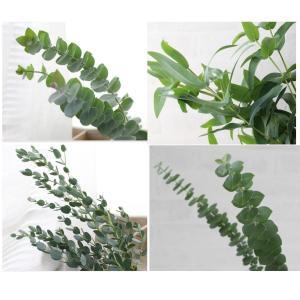 ユーカリ葉枝(生花)セットです。  そのまま花瓶に飾ったり、壁掛けやテーブルデコにしたりと、様々な飾...