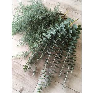 新鮮なユーカリ銀世界とブルーアイスの葉枝(生花)セットです。  そのまま花瓶に飾ったり、壁掛けやテー...