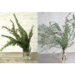 新鮮なローズマリー&ウエストリンギアの葉枝(生花)です。  そのまま花瓶に飾ったり、壁掛けやテーブル...