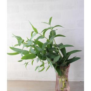ユーカリ ニテンス (シャイニングガム) 葉枝(生花) 40〜60cm | アレンジメント・スワッグ素材 枝物 空間装飾 ナチュラル グリーンインテリア 国産|kugelfg