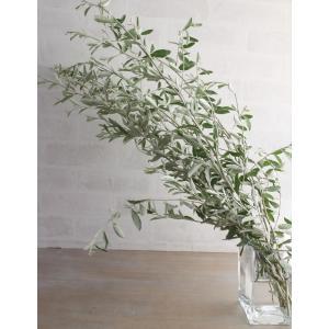 新鮮なロシアンオリーブの葉枝(生花)です。 白銀色が混じった小さめの葉が特徴的です。 なお、名前はオ...