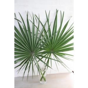 新鮮なシュロ(ヤシ)の葉枝(生花)です。 ヤシの種類であり、葉枝は長持ちします。 なお、葉裏や枝には...