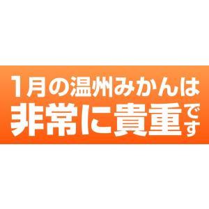 みかん 長崎県産 越冬 晩生 完熟伊木力みかん2.5kg×2箱|kuishinboucom|02