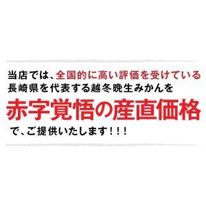 みかん 長崎県産 越冬 晩生 完熟伊木力みかん2.5kg×2箱|kuishinboucom|04
