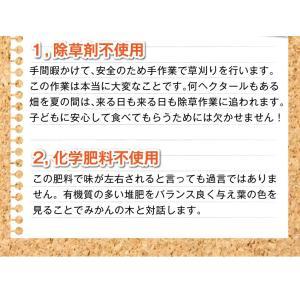 みかん 長崎県産 越冬 晩生 完熟伊木力みかん2.5kg×2箱|kuishinboucom|08