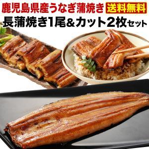 うなぎ 蒲焼き 父の日 国産 鹿児島産 風呂敷包み 特大蒲焼...