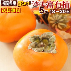 柿 訳あり 送料無料 5kg 福岡県産 うきはの富有柿 ご家庭用 ポイント5倍