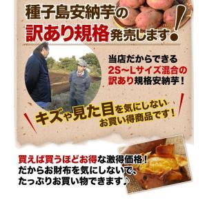 安納芋 訳あり 種子島産 安納いも 蜜芋 MLサイズ限定 2箱以上 送料無料 生芋(さつまいも)|kuishinboucom|02