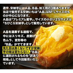 安納芋 訳あり 種子島産 安納いも 蜜芋 MLサイズ限定 2箱以上 送料無料 生芋(さつまいも)|kuishinboucom|03