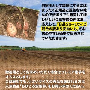 安納芋 訳あり 種子島産 安納いも 蜜芋 MLサイズ限定 2箱以上 送料無料 生芋(さつまいも)|kuishinboucom|04