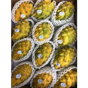 イエローピタヤ ドラゴンフルーツ コロンビア産 1箱 12玉