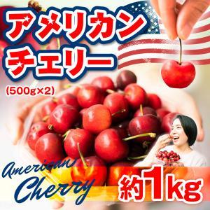 数量限定 アメリカンチェリー さくらんぼ 1.2kg 送料無料 アメリカ産 果物 フルーツ
