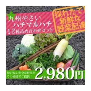 九州やさいオススメ野菜12種セット! kumamiru