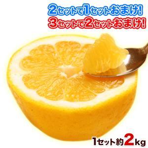 TVで紹介 和製グレープフルーツ2kg(河内晩柑) 訳あり ...