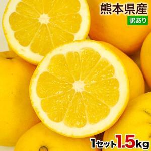 河内晩柑 和製グレープフルーツ 1.5kg 訳あり 熊本県産 ジューシーみかん 2セット購入で1セット・3セットで3セット増量 3-7営業日以内に出荷予定 土日祝日除く