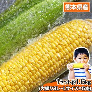 ■名称 とうもろこし  ■原産地 熊本県産  ■内容 ゴールドラッシュ約1.6kg ・大振り3L-L...