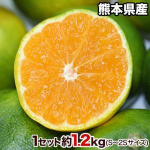 青いけど甘い 熊本県産 甘熟 グリーンハウスみかん 送料無料 3箱毎に1箱おまけ 秀品 約1.2kg S〜2S小玉サイズ限定 7月中旬-8月上旬頃より順次出荷