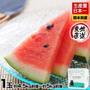 送料無料 訳あり品 スイカの本場熊本県産 熊本すいか1玉(約...
