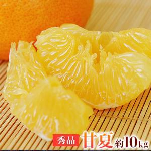 送料無料 秀品 熊本産甘夏みかん約10kg/3L-Mサイズ ...