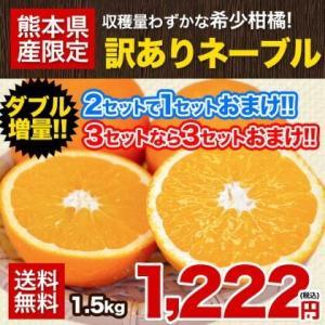 送料無料 訳ありネーブルオレンジ1.5kg 安心・安全の熊本県産 2セット購入で1セット増量 3セット購入なら3セット増量 4月中旬-5月上旬頃より順次出荷