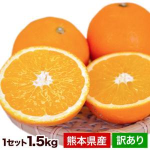 ネーブル オレンジ 1.5kg 送料無料 訳あり 熊本県産 旬 の みかん 2セットで1セット 増量...