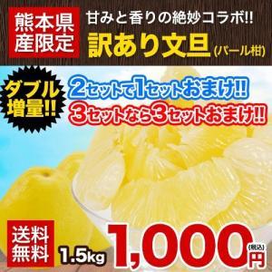 送料無料 訳あり文旦(パール柑・セレブ柑)1.5kg 爽やかな香り 熊本県産 2セット購入で1セット増量 ※複数購入はおまとめ配送 2月下旬-3月中旬頃より出荷