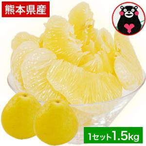 文旦 訳あり パール柑・セレブ柑 1.5kg 爽やかな香り 熊本県産 2セット購入で1セット増量 送料無料 ※おまとめ配送 2月末-3月中旬頃より順次出荷